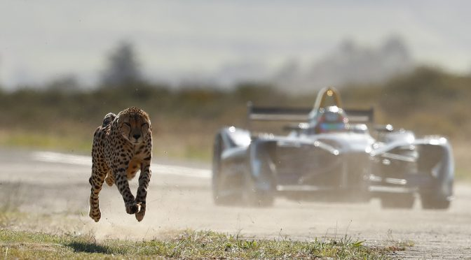 Watch as a Cheetah and Formula E race car go head to head in the South Africa Savanna!
