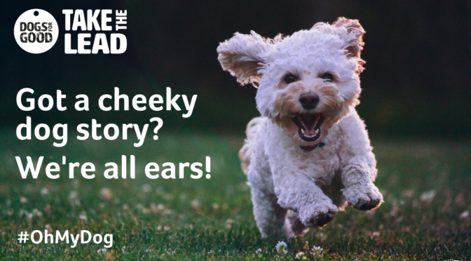 Charity launches competition to sniff out the UK's cheekiest dog stories